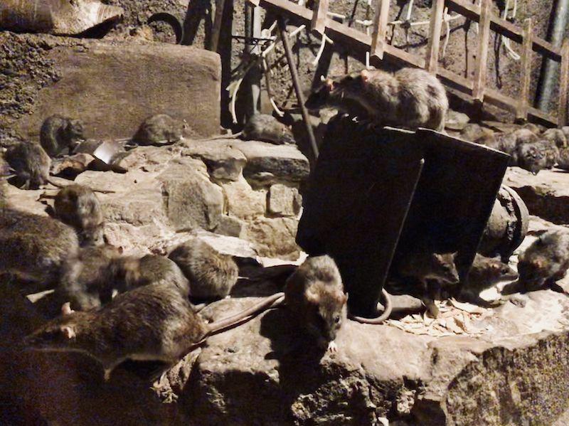 Besonders toll ist der unterirdische Zoo. Hier gibt es Ratten, Maulwürfe, Fledermäuse und sogar eine Vogelspinne. Wer damit nicht rechnet, erschreckt sich ganz schön!