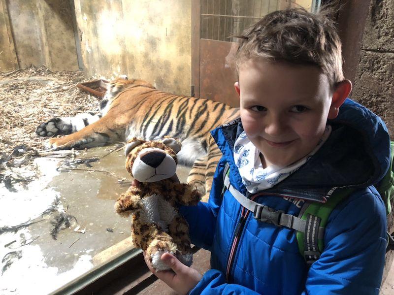 Gestatten? Das ist Leo! Und der besucht heute seine Verwandten im Zoo Osnabrück, unter anderem die Tiger Argo und Diana.