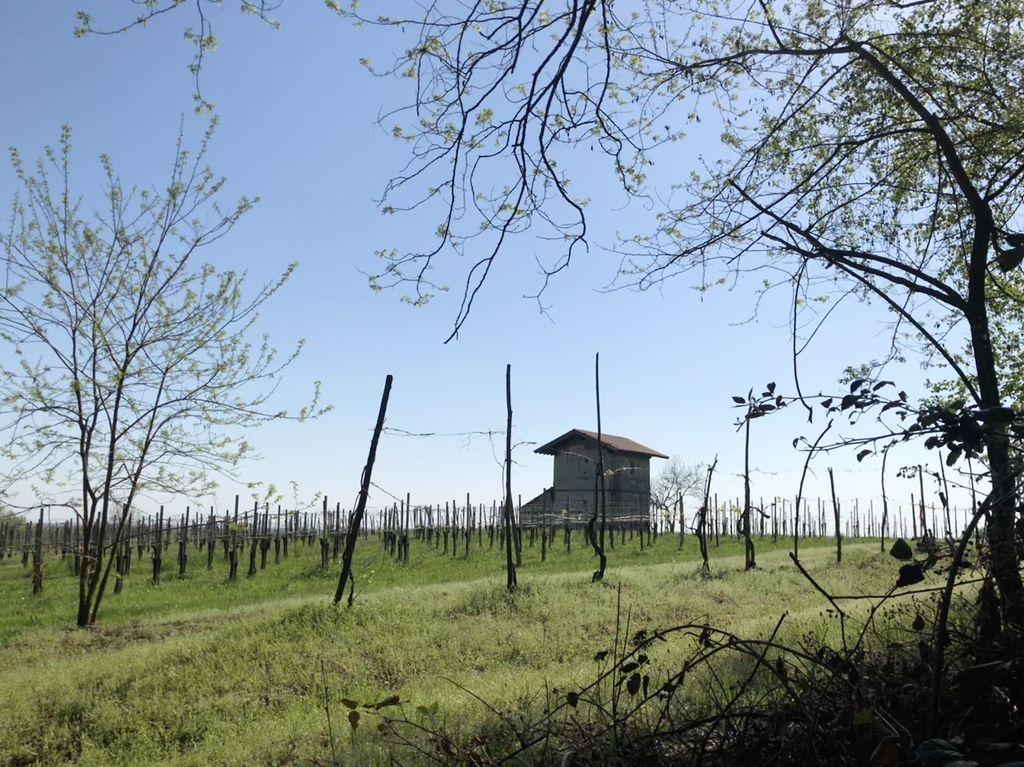 In den höheren Lagen wird Wein angebaut. Schon die Römer kultivierten hier die Nebbiolo-Traube.