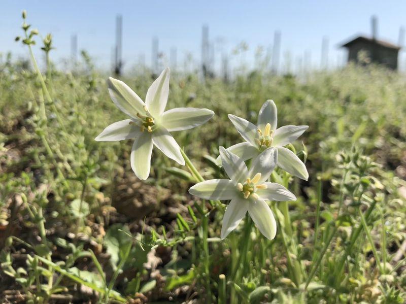 Gorgonzola, Reis und andere Leckereien: Die herrliche Landschaft des Piemont bietet den Rahmen.