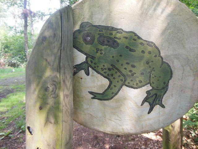 Auf großen Holzscheiben sind Tiere und Pflanzen des Waldes aufgemalt. Vielleicht hätten wir die Kröte sonst gar nicht entdeckt?
