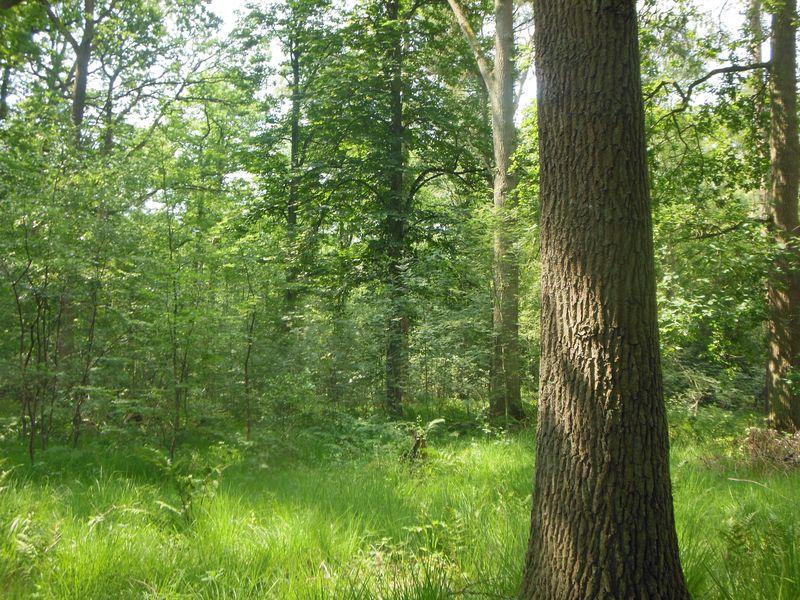 Nur Bäume? Von wegen! Jetzt sehe ich den Wald wirklich mit anderen Augen!