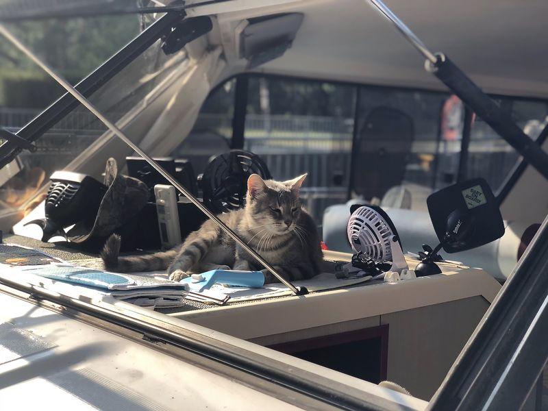 """Gestatten? Das ist Hausboot-Kapitän """"Loulou"""". Die Bootskatze reist mit einem französischen Ehepaar mit."""