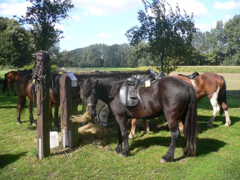 Die Rast-Stationen bieten alles, was Reiter- und Pferdeherzen begehren: Anbindebalken, Wasser und eine ordentliche Portion Heu.