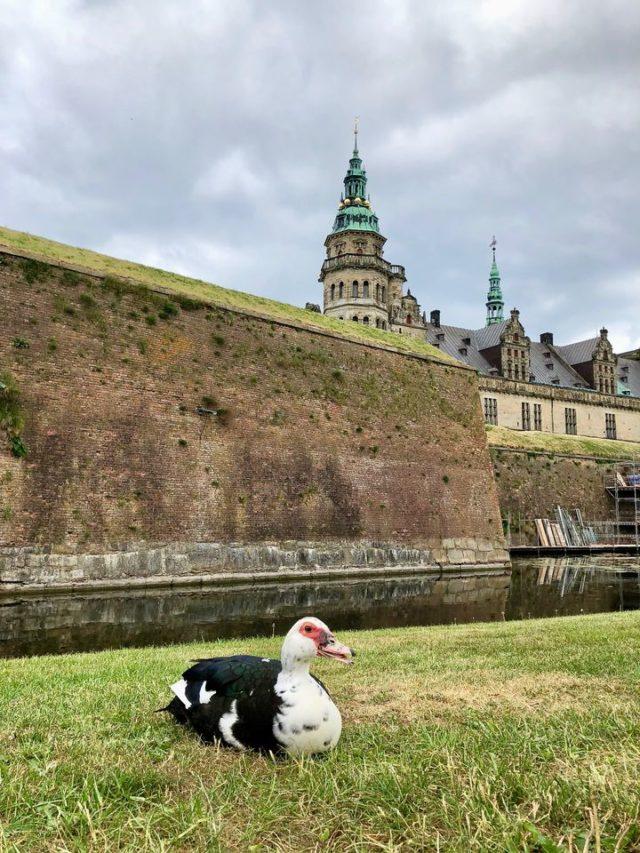 Heute ist Kronborg ein idyllisches Ausflugsziel. Kaum zu glauben, dass derlei Verteidigungsanlagen einmal nötig waren.
