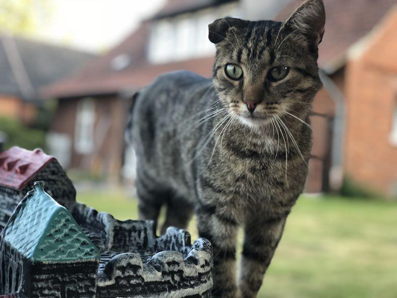 Glücklich kehrte der kleine Konrad mit den drei goldenen Ringen zurück zum Schloss.
