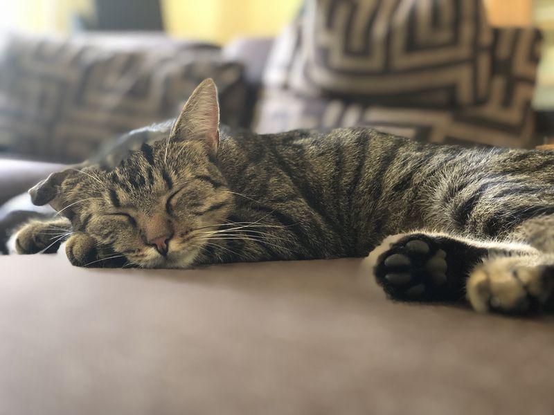 Bei der Prinzessin geht es den drei kleinen Kätzchen gut. Wenn sie nicht gerade Unfug machen, schlummern sie auf dem Prinzessinnen-Bett.