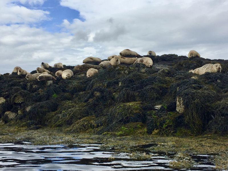 Auf den Felsen im Wasser lebt eine muntere Robben-Kolonie. Die Tiere haben keine Angst vor den Menschen.