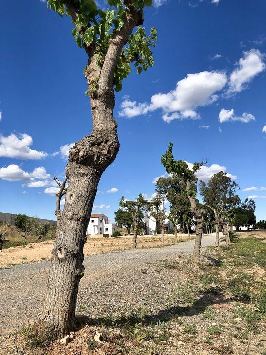 Willkommen in Mirós Welt: Blauer Himmel, rote Erde - und am Ende des Weges das schneeweiße Anwesen.