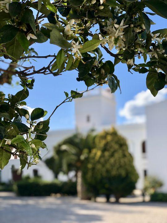 Hier, umgeben von dem Duft von Orangenblüten, fühlte sich der spanische Surrealist vom ersten Moment an wohl.