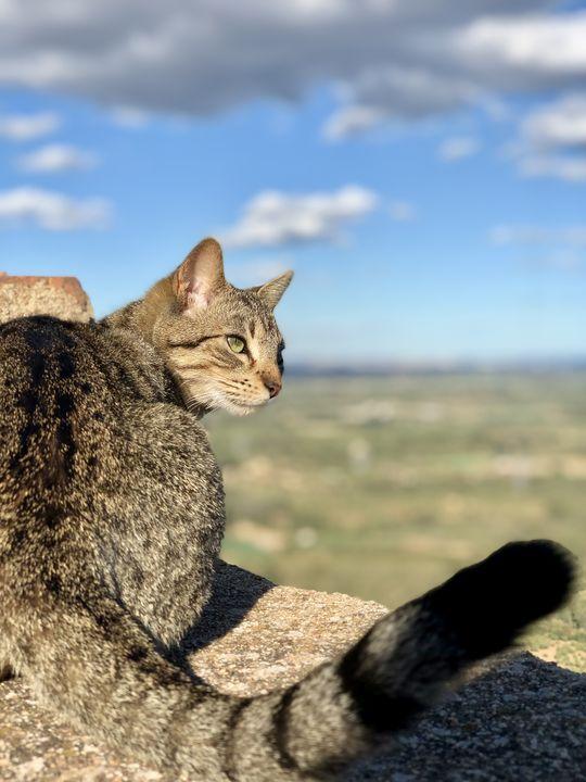 Auch diese Katze scheint den Ausblick und die Ruhe des Ortes zu genießen. Miró soll fast täglich hergekommen sein.