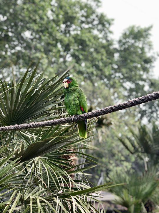 Die Voliere für die Papageien ist so groß, dass sie gar nicht weiter auffällt. Wer sie betritt, fühlt sich zwischen den bunten Exoten wie im Urwald.