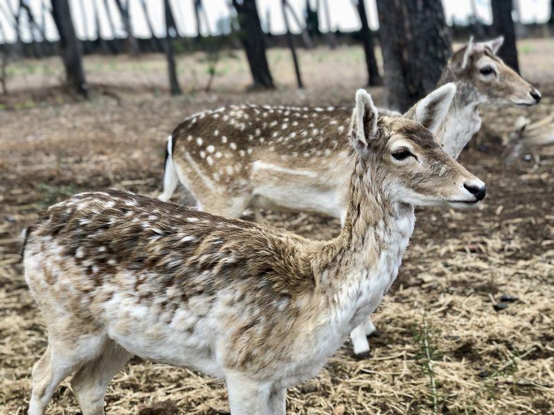 Inzwischen sind wieder viele Tierarten im Parc Samà eingezogen. Im weitläufigen Wildgehege können die Besucher Rehe füttern.