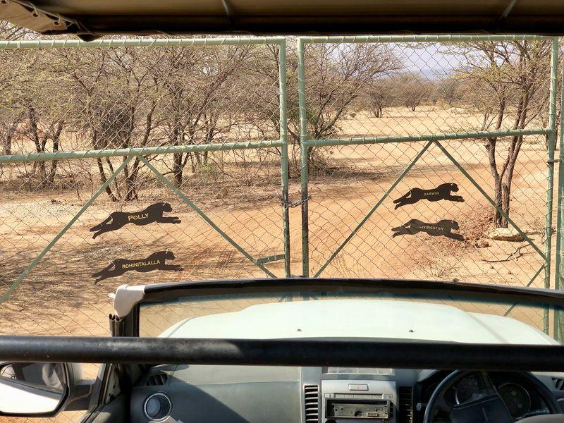 Die Freigehege beim Cheetah Conservation Fund sind so groß, dass die Tiere so artgerecht wie möglich leben können.