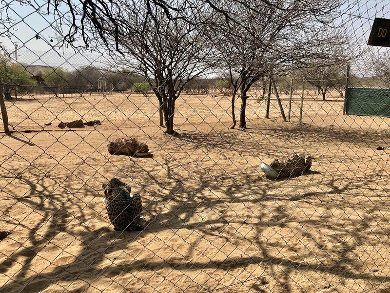 Ran an den Speck beziehungsweise ans Eselsfleisch. Damit  die Tiere gesund bleiben, werden zusätzlich auch noch Mineralien und Vitamine ins Essen geschummelt.