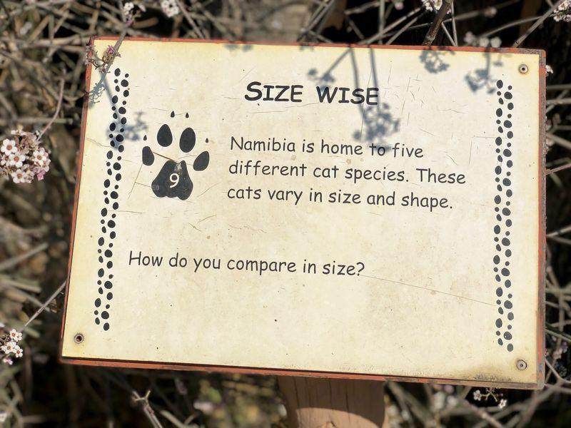 Erst gucken - dann lernen: Neben einem Film über die Arbeit mit den Tieren bietet der Cheetah Conservation Fund auch einige Mitmachen-Stationen.
