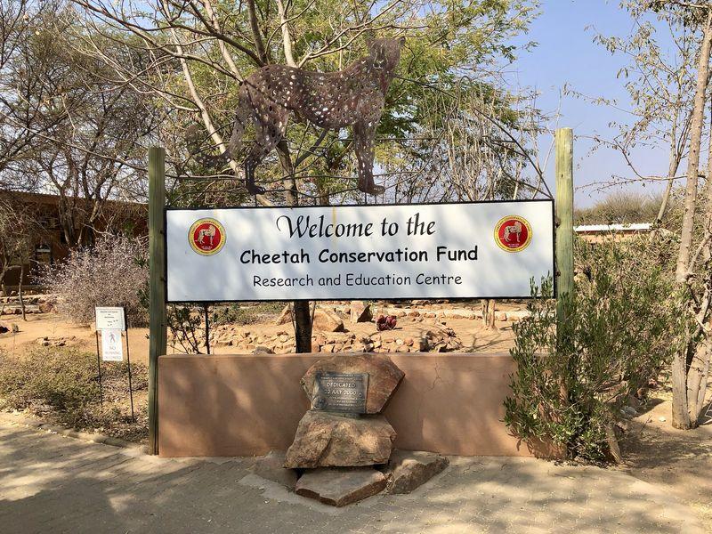1990 wurde der Cheetah Conservation Fund gegründet. Inzwischen hat er sich zu einer anerkannten Gepardenforschungsstation entwickelt.