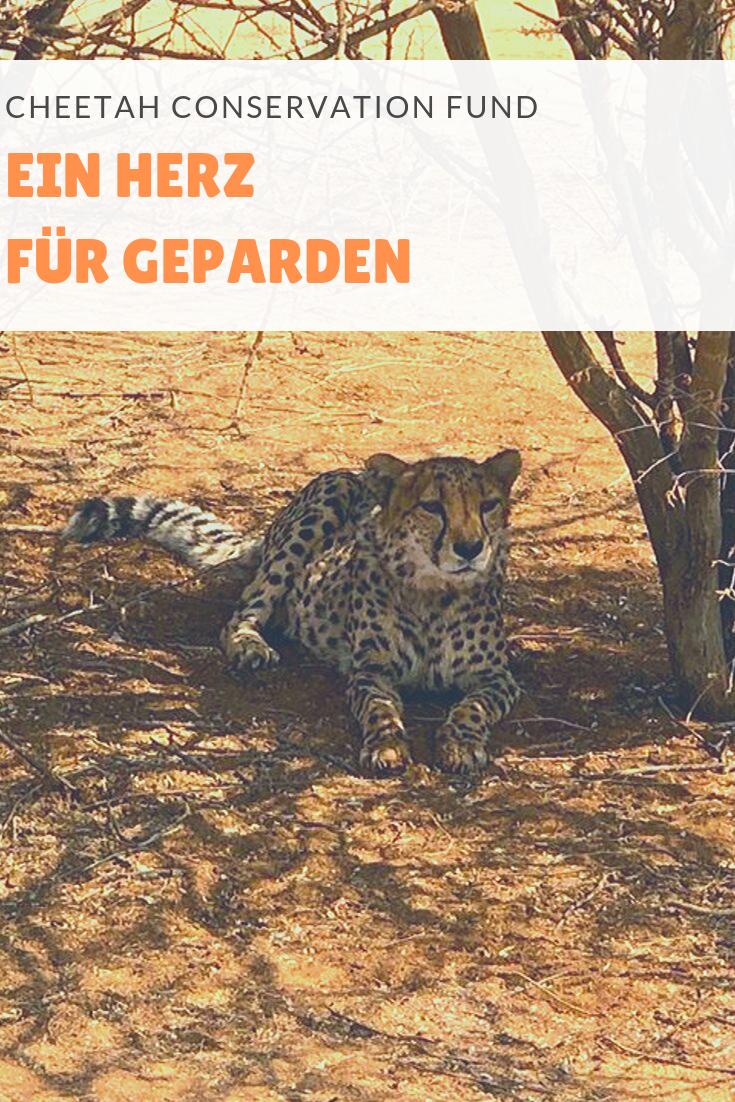 In dieser Entdeckerstorys dreht sich alles ums Konzept des Cheetah Conservation Fund in Namibia