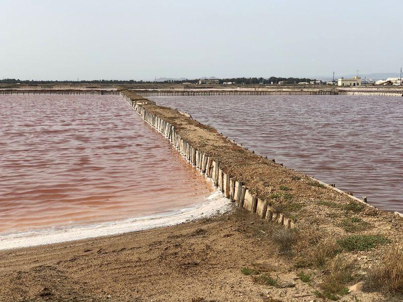 Je höher die Salzkonzentration im Wasser, desto intensiver wird die Rotfärbung durch die Mikroalge.