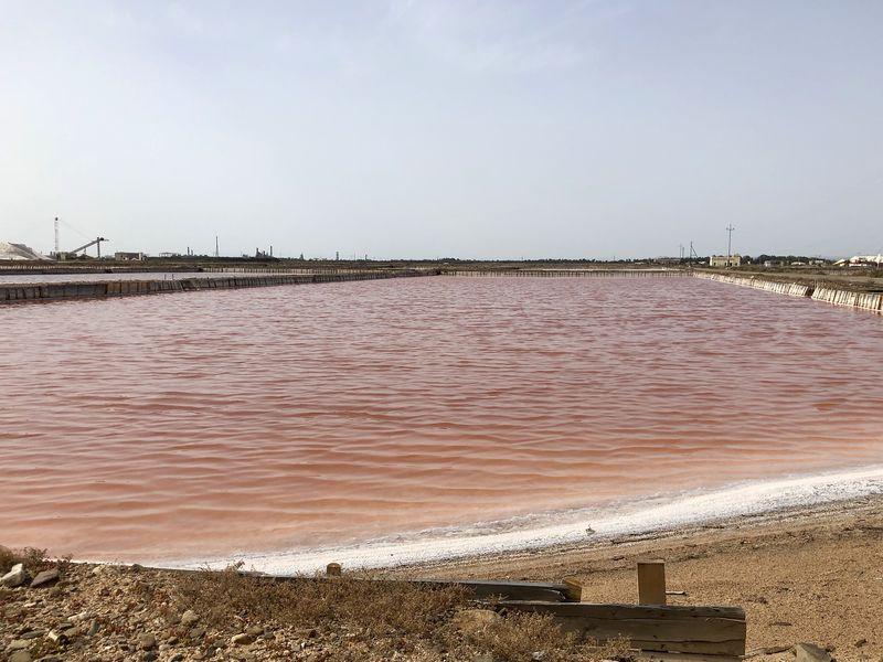 """Aufgrund ihres hohen Betacarotin-Gehalts verleiht die Mikroalge """"dunaliella salina"""" dem Wasser eine gold-purpurne Farbe."""