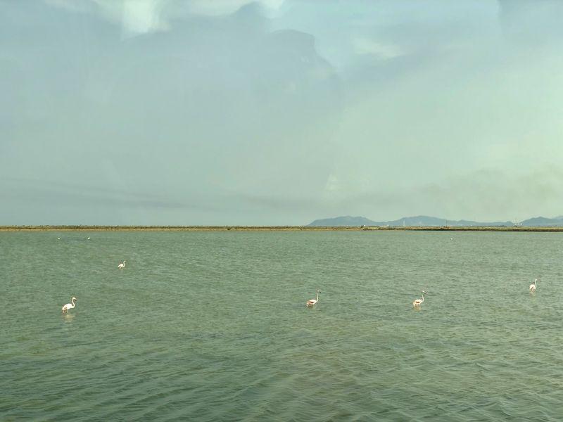 Da das rote Wasser die Salinenkrebse färbt und die wiederum Hauptnahrung für die Flamingos sind, ist die Alge am Ende auch für die pinken Flamingofedern zuständig.