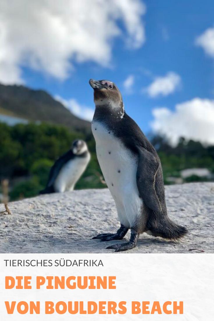 Pin_It_Pinguine