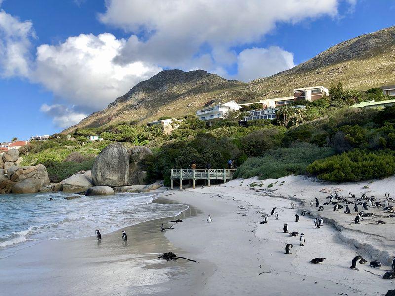 Die Pinguine haben eine gute Wahl getroffen: Boulders Beach ist eine Idylle für Mensch und Tier.