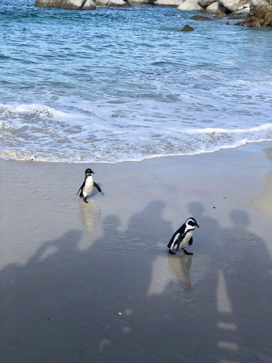 Wer genau hinschaut, sieht die Schatten der vielen Touristen, die das Gewackel am Strand beobachten.