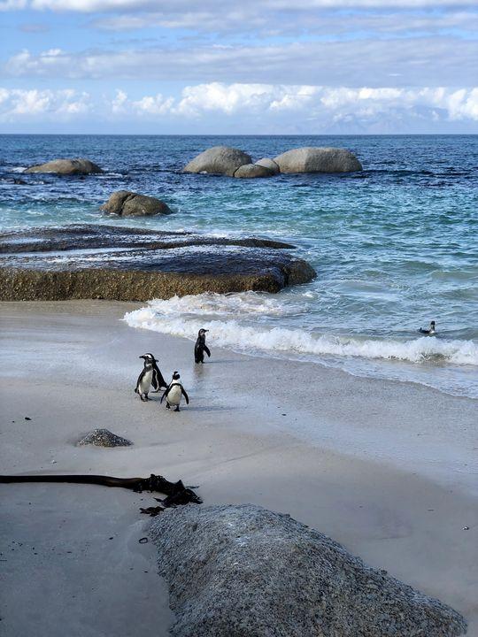 Am Strand wirken die Pinguine eher unbeholfen. Aber im Wasser sind sie elegante Schwimmer.