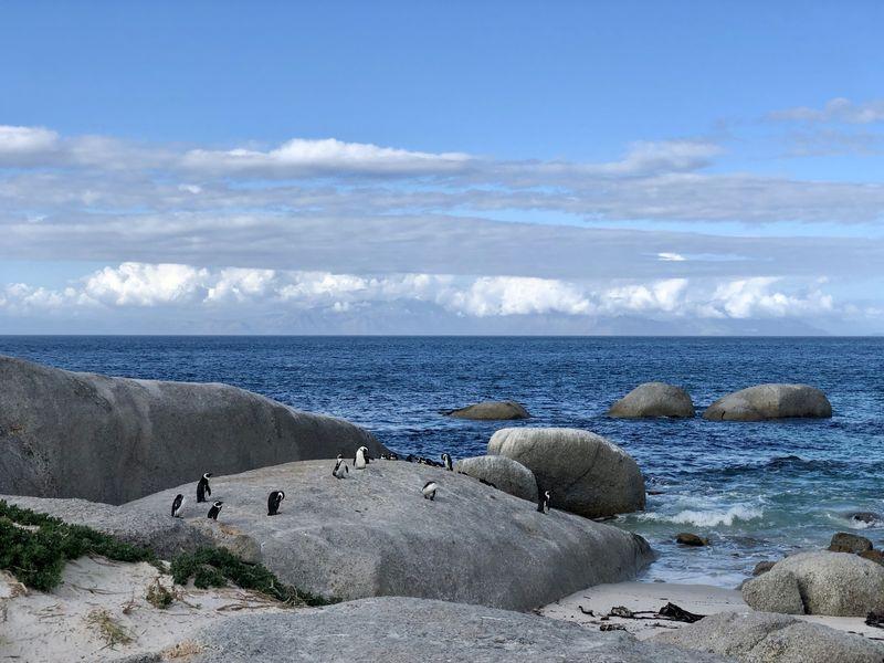 Den Strand haben die Frackträger kurzerhand zu ihrer eigenen Pinguin-Badeanstalt gemacht.