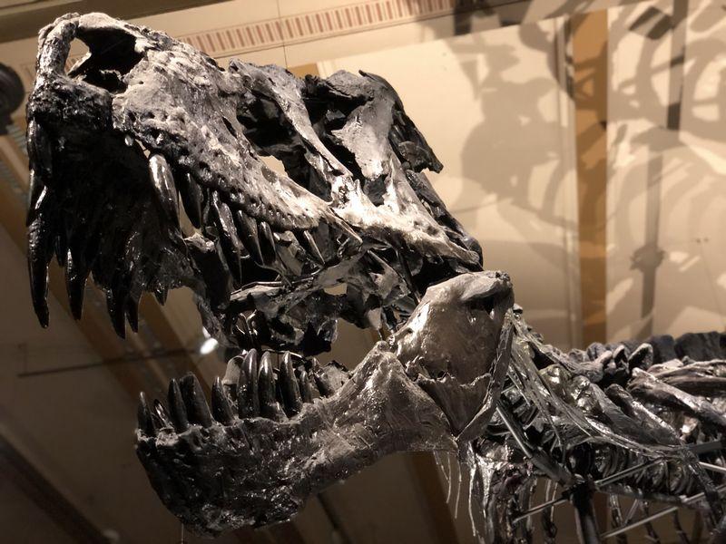 Keine Angst: Tristan ist schon über 60 Millionen Jahre tot. Aber sein Skelett im Naturkundemuseum gehört natürlich zu den Berlin-Tipps für Entdecker.