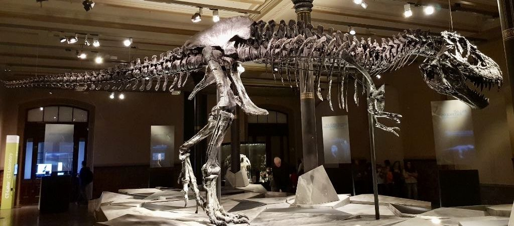 Ist er nicht ein echter Herzensbrecher? T-Rex Tristan Otto macht den Anfang bei unserer Entdecker-Tour.