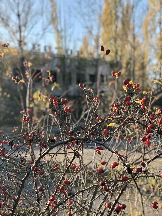 """Pripyat wurde einst """"Stadt der Rosen"""" genannt."""
