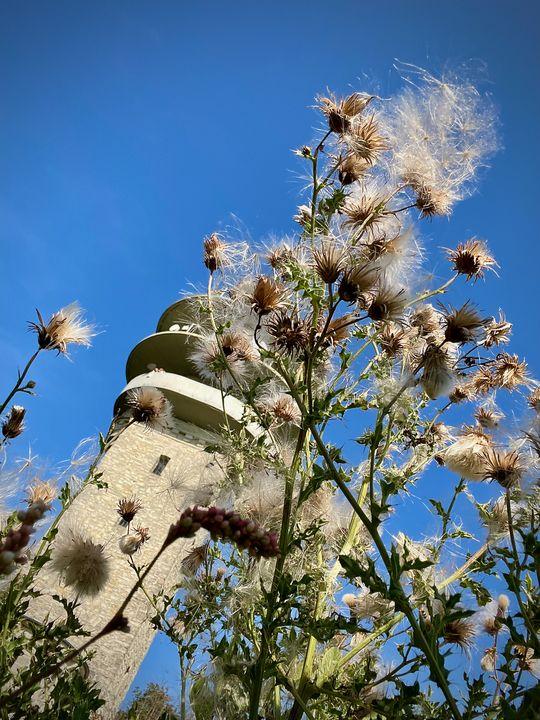 Um den Turm herum gibt es jede Menge Natur zu entdecken.