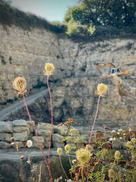 Pflanze trifft Bagger: Dass hier mit schwerem Gerät gearbeitet wird, ist erst auf den zweiten Blick erkennbar.