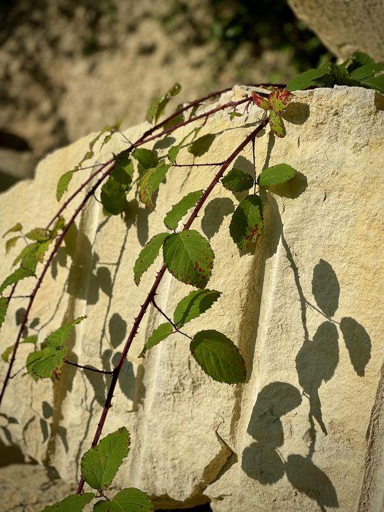 Die goldgelbe Farbe des Sandsteins hat eine große Fangemeinde. Seit dem Mittelalter ist er auf Siegeszug.