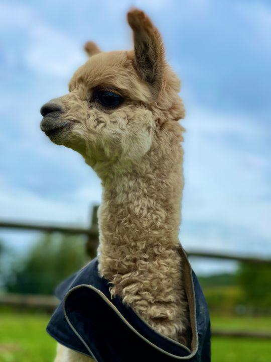 """Unbestrittener Star der Herde ist die kleine """"Vida"""". Sie ist gerade einmal fünf Wochen alt und hatte einen schweren Start. Inzwischen tollt sie aber unbekümmert mit über die Weide."""