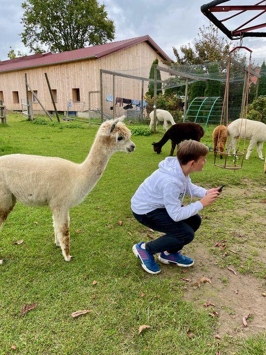 Achtung, Alpakas sind Distanztiere! Aber wenn man sie nicht bedrängt, kommen sie oft von selbst neugierig heran und schauen einem über die Schulter.