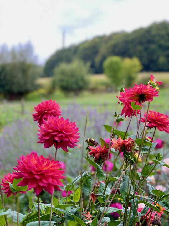 Die herbstliche Gartenausstellung auf Hof Löbke ist ein Fest für die Sinne.